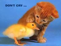 Nemoj plakati... od smijeha...