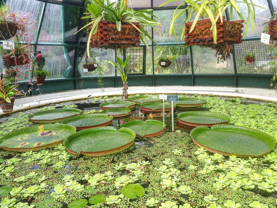 Amazonski Lopoc Botanicki Vrt Pmf A Carapa Floyd Blog Hr