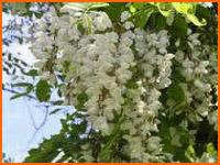 čarobni miris čarobnog cvijeta ...na rubu svijeta..