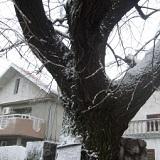 Proljetni snijeg