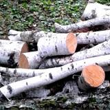 Pala je moja breza