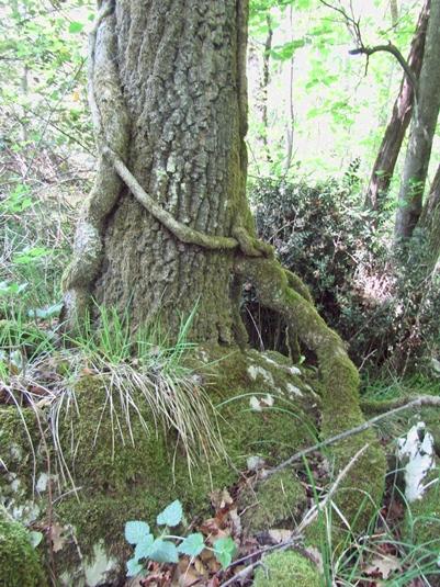 Zvijezde jednog stabla brda